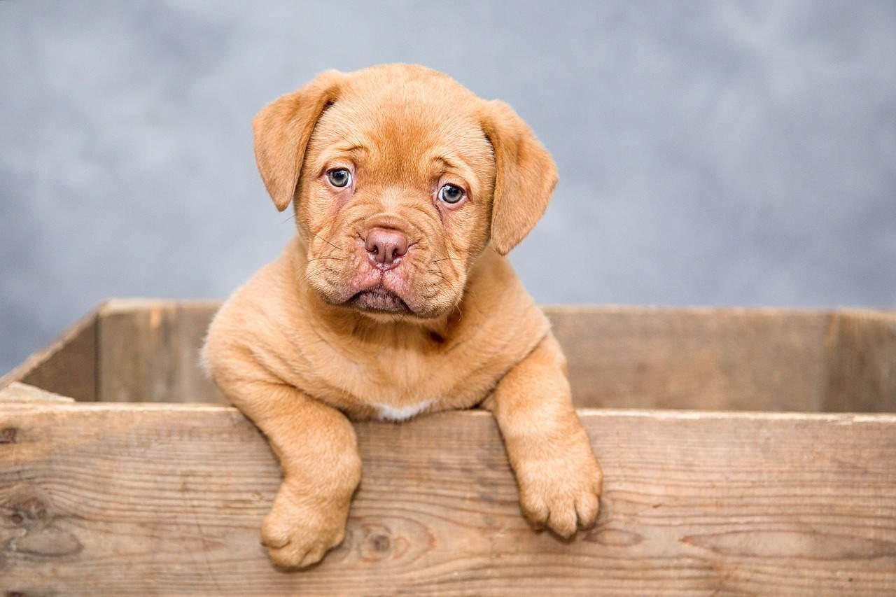 Állatszavatosság: lehet-e szavatossággal élni állat vásárlása esetén?